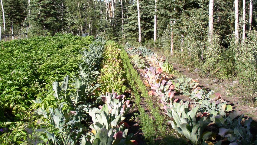 <h1>The vegetable garden.</h1><p>Riverview maintains an extensive vegetable garden each summer.  You can walk down to the garden along the river bank.</p>